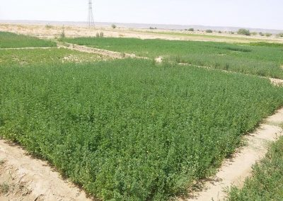 PIC 11 Production of fodder plot